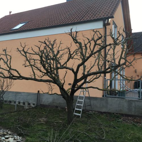 Gartenbau imhof eine weitere wordpress website - Gartenbau limburgerhof ...
